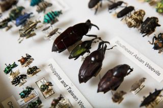 couple-bug-collection-asu