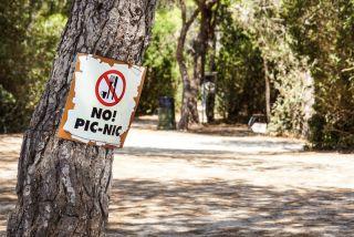 Tree picnic sign