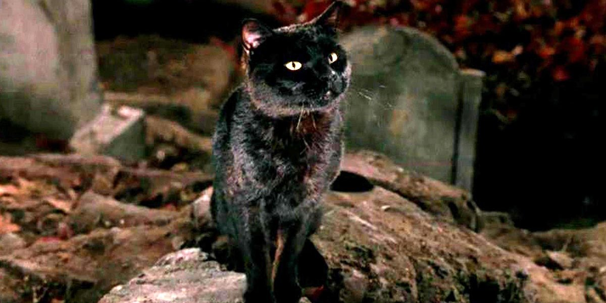 Thinkery Binx hanging in a graveyard in Hocus Pocus