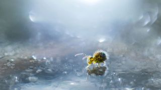 Macro photography grabs top prize in Close-up Photography of the Year 2020