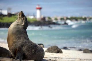 A sea lion on the beach