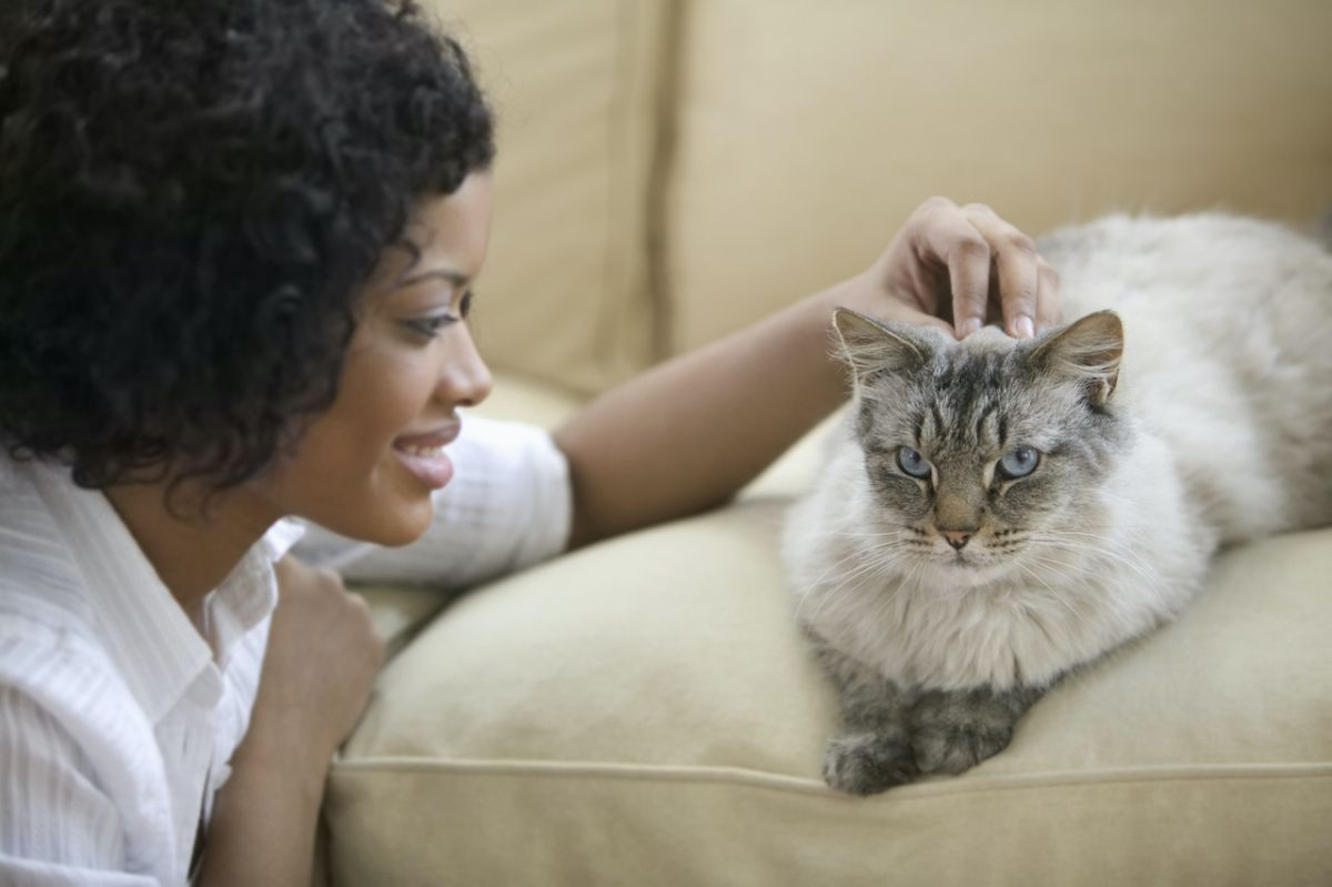 What is your cat thinking? Here's what your furry friend is trying to tell you