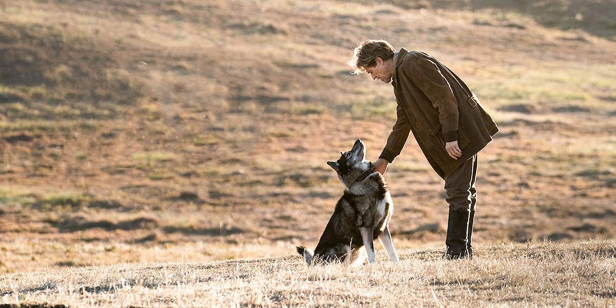 The 10 Best Dog Movies Ranked Including Togo Cinemablend