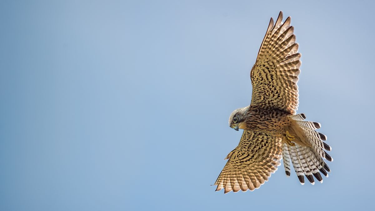 5 tips to capture great bird in flight photography