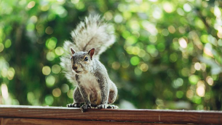how to get rid of squirrels in the garden walking on fence