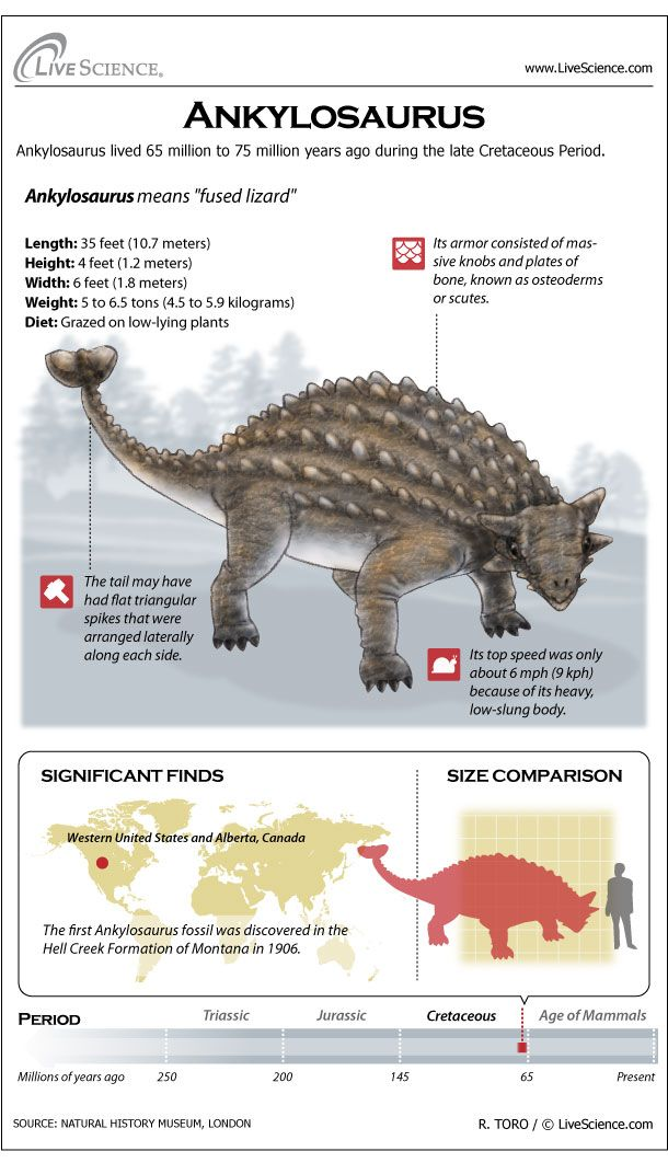 Ankylosaurus: Facts About the Armored Lizard | Live Science