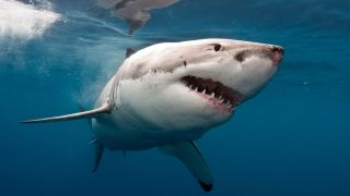 How to watch Shark Week online