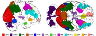 brain imagination map