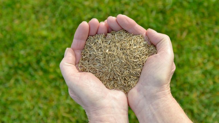 how to plant grass seeds: two hands holding a pile of grass seeds