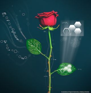 a schematic of an electronic rose