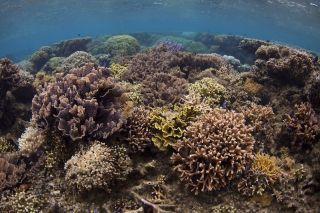 Corals in a marine protected area