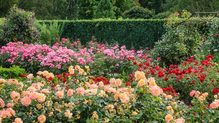 RHS Rosemoor Queen Mother's Rose Garden