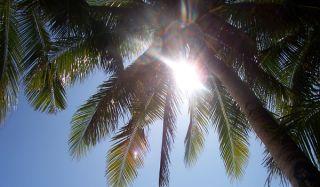 sunlight-palm-tree-110207-02