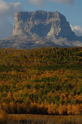 Fall Leaves at Glacier National Park