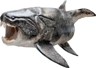 a reconstruction of the placoderm Dunkleosteus