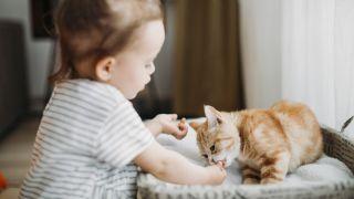 Best kitten treats - a kitten accepting a treat from a child