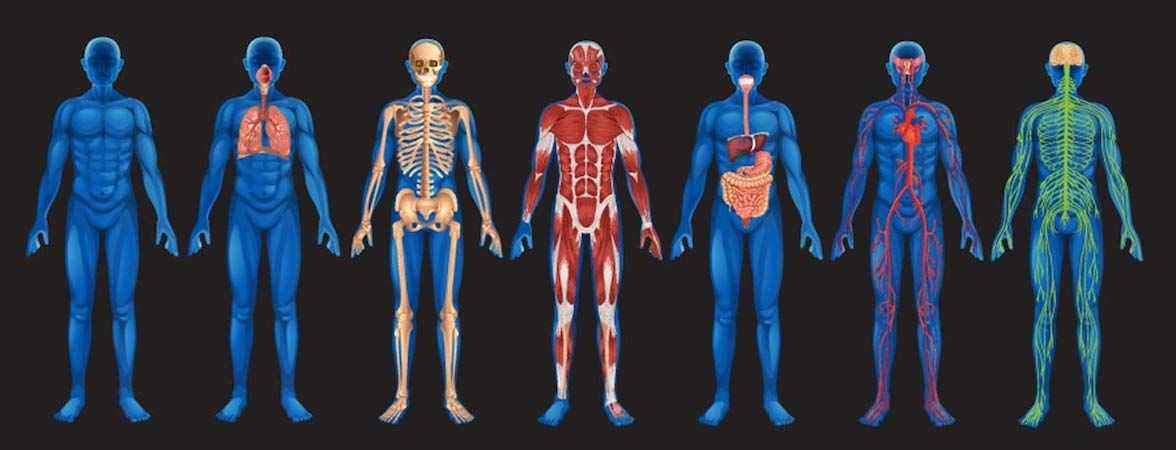 Exhaled Pounds: How Fat Leaves the Body