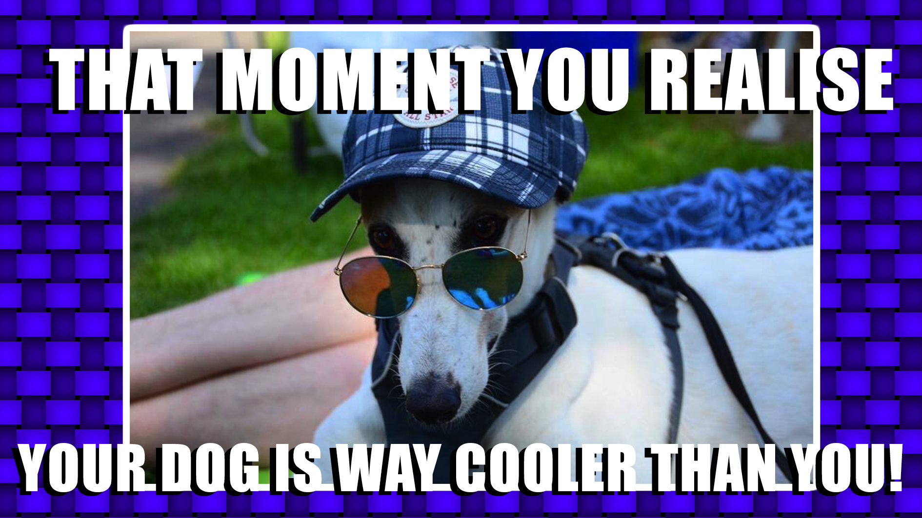 Meme featuring dog wearing sunglasses