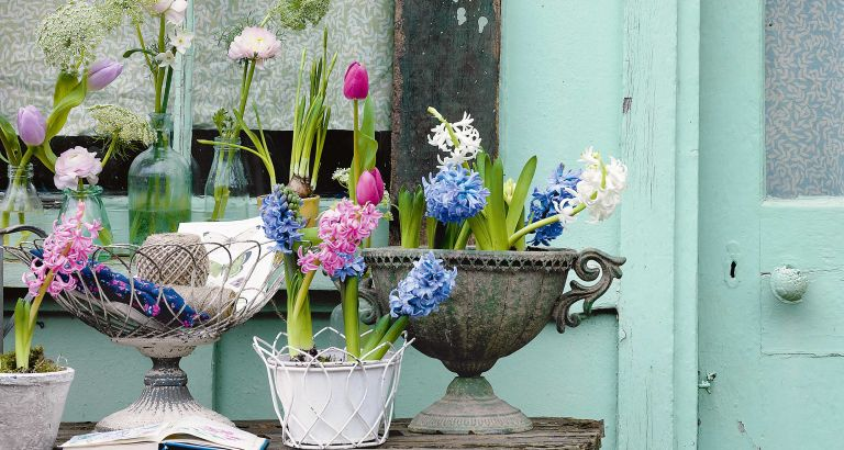 Best flowers to plant for spring