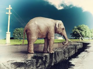 Elephant by cracked road