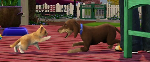 Can You Play The Sims  Cats And Dogs Standalone