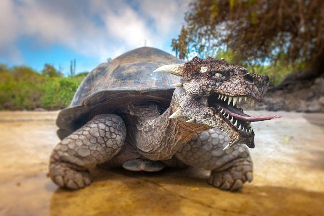 Por que o sexo de tartaruga gigante se tornou a base de um efeito sonoro chave de 'Game of Thrones'