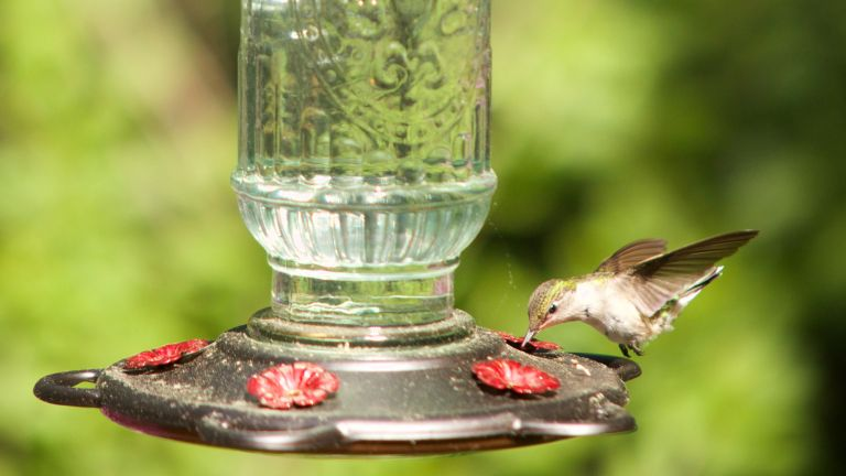 What not to feed wild birds: Bird feeding mistakes, bird drinking water on a feeding table