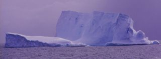 antarctic-fish-frozen-water-100831-02