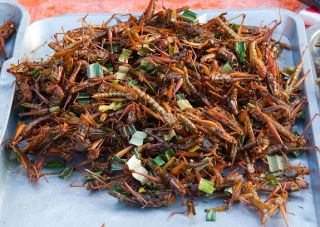 Thai grasshopper snack food in Bangkok, Thailand.