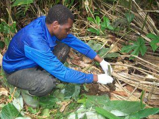 gorilla dung deng deng national park cameroon