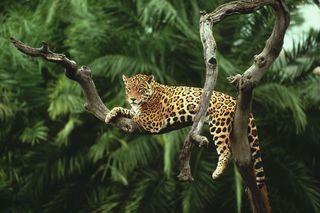 amazon, rainforest, Brazil,