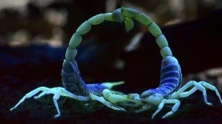 Scorpions Night On Earth