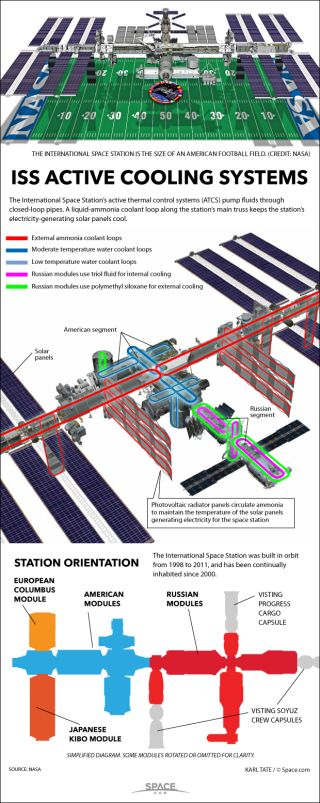 Infographic: How the ISS's Ammonia Cooling System Works