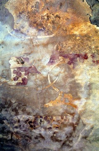 Cow rock art from Africa