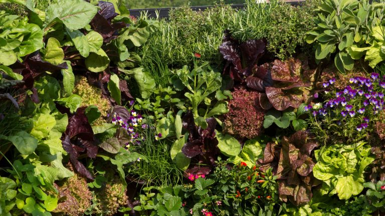 what to plant in september vegetables and flowers