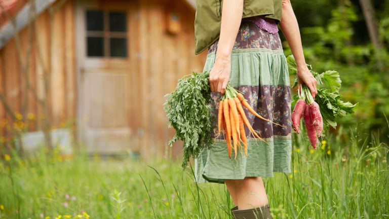 how long to steam carrots: woman with freshly pulled carrots