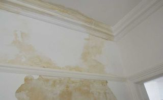 How To Deal With Damp And Rot Real Homes