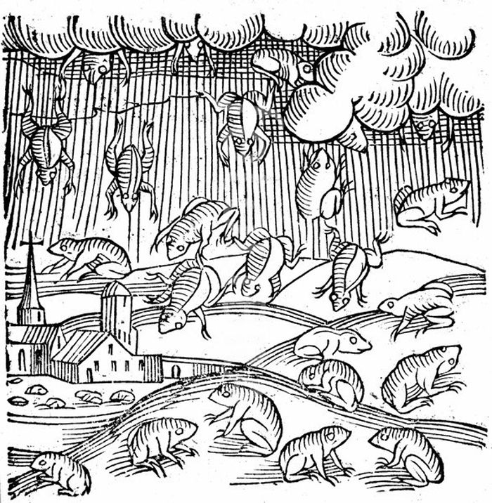 Raining Frogs & Fish: A Whirlwind of Theories | Live Science