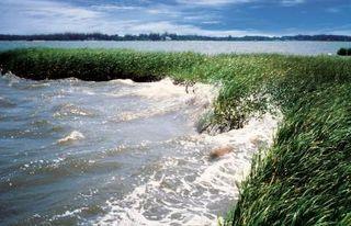 delaware wetlands