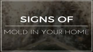 Signs Your House has Mold | Top Ten Reviews