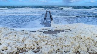 Sea-foam from blooming algae on the German coast of the Baltic Sea.