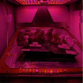 The Veggie experiment, which is used to grow lettuce on the International Space Station. In a new study, researchers have discovered new bacteria on the space station that they think could support future food growing efforts in space.