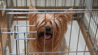 alternatives to crate training