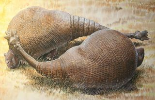 glyptodonts with club tails