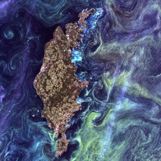 Plankton blooms captured by the Landsat Program.