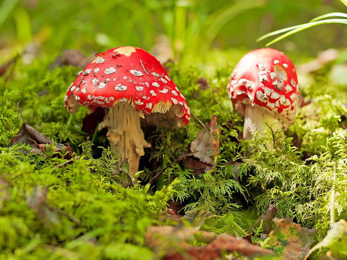 11 Odd Facts About 'Magic' Mushrooms | Live Science