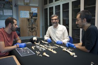 Antonio García-Tabernero, Antonio Rosas and Luis Ríos stand beside the skeleton of a Neanderthal child.