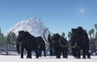 These dwarf mammoths were not woolly mammoths. Rather, the researchers suspect the beasts were more adapted to warmer environments, appearing more like modern African or Asian elephants, with a sparse covering of hair. They would've sported curvy tusks, t