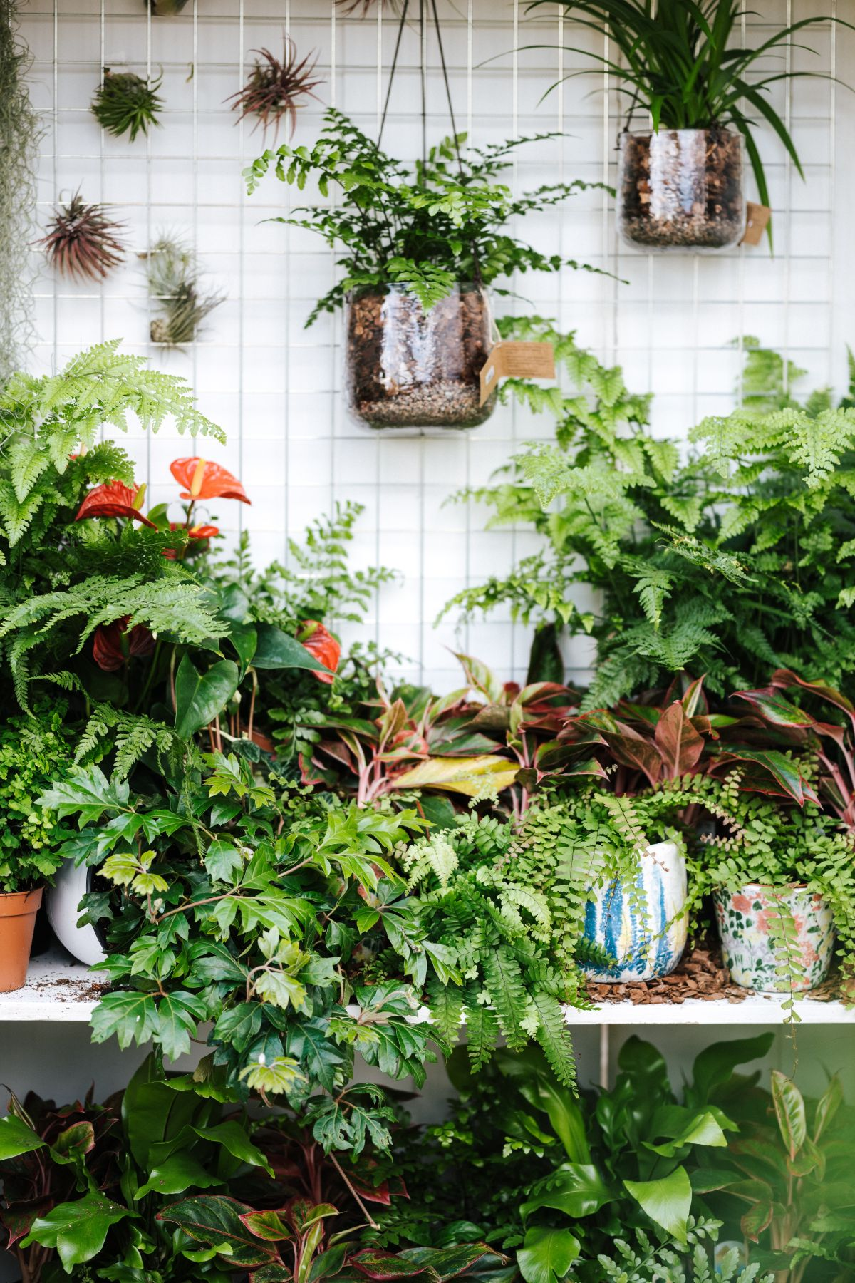 11 easy house plants: low-maintenance, forgiving and wonderfully indestructible