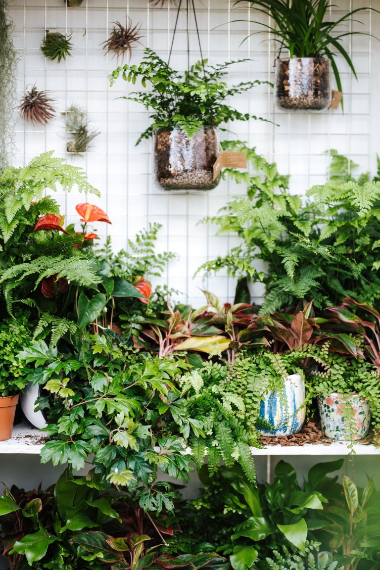easy house plants on display in home